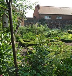 Fewo in der Uckermark, Rosengarten