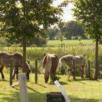 Fewo in der Uckermark, Ferienanlage (Pferdekoppel)