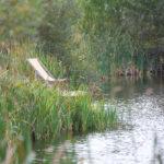 Fewo in der Uckermark, Ferienanlage (Badeteich)